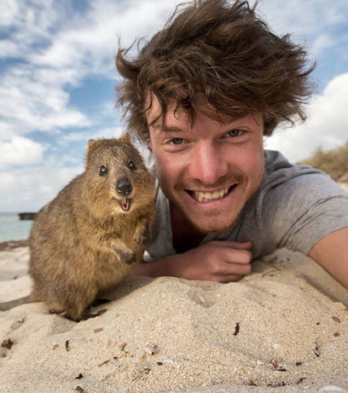 selfie wombat mignon