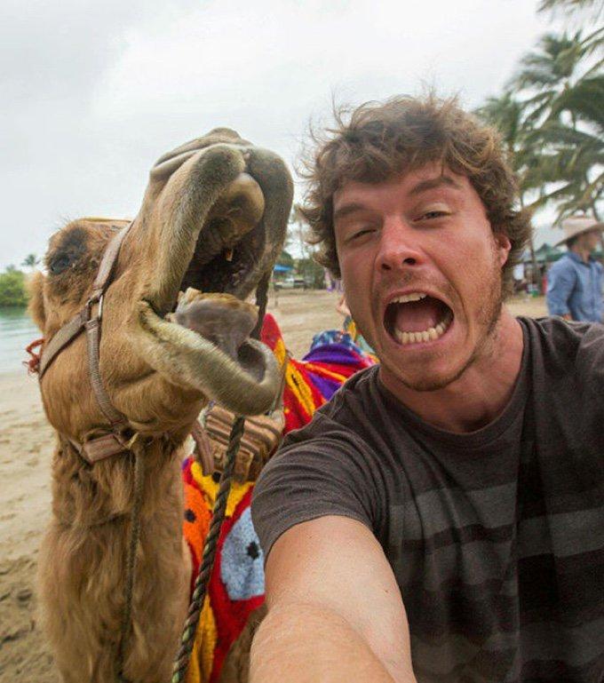 selfie dromadaire