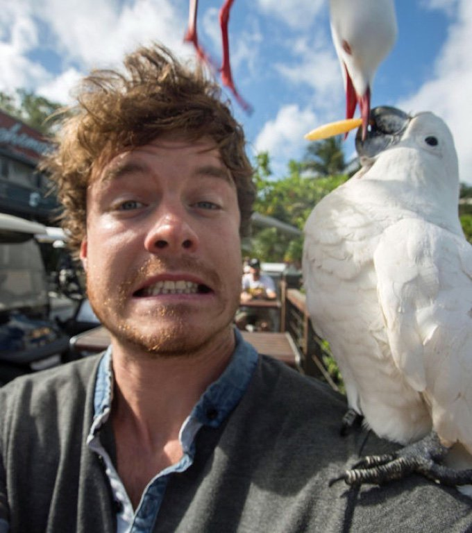selfie perroquet mouette