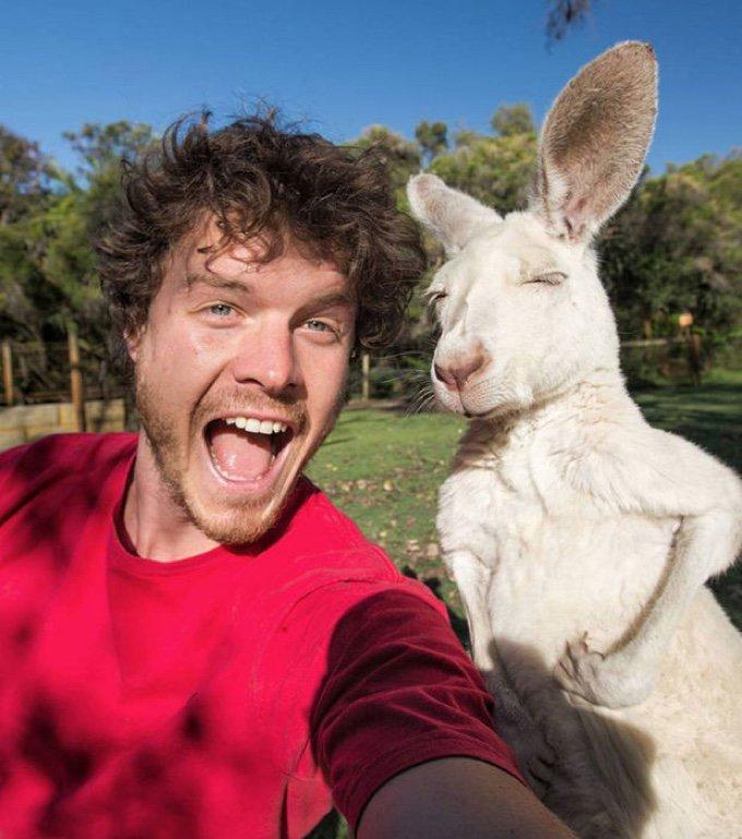 selfie kangourou blanc