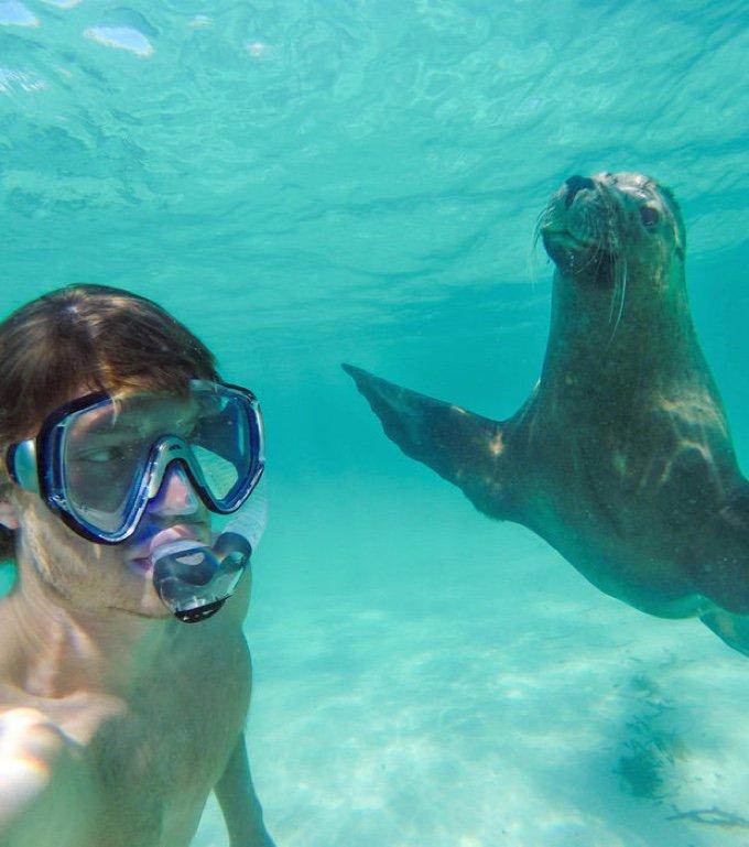 selfie sous l'eau phoque