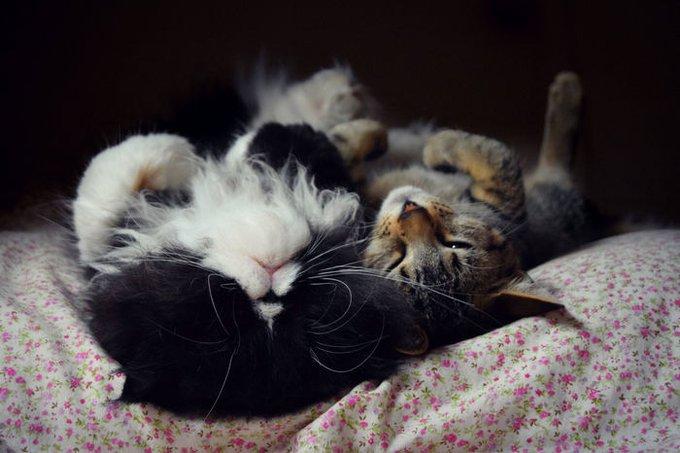 Deux chats très détendus