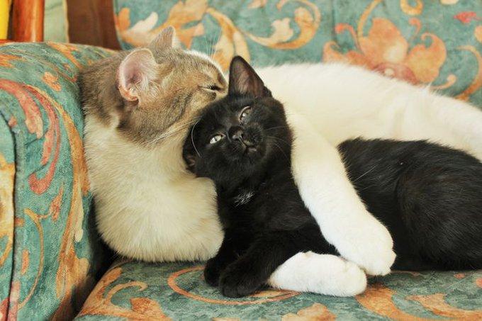 Gros câlin entre deux chats