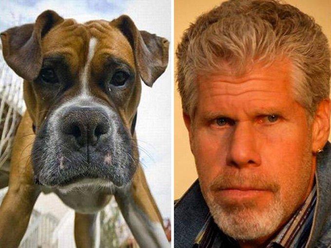 chien sosie acteurs célèbres