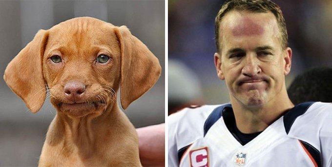 chien sosie sportif célèbre