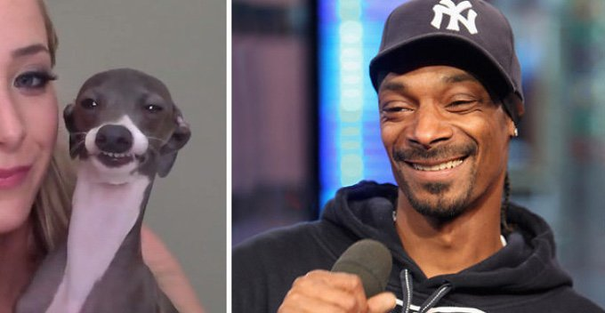 chien sosie snoop dog