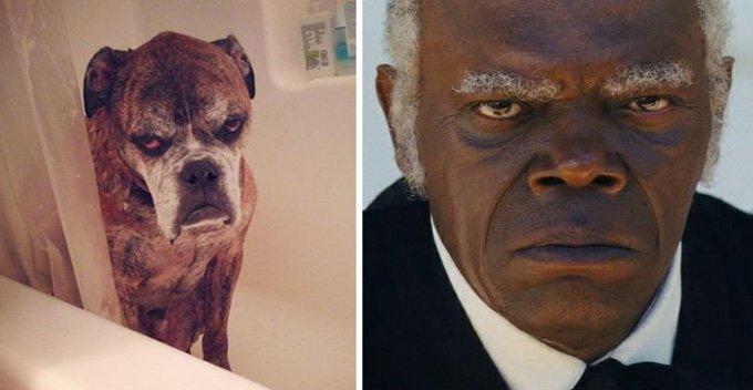 chien boxer sosie célébrité