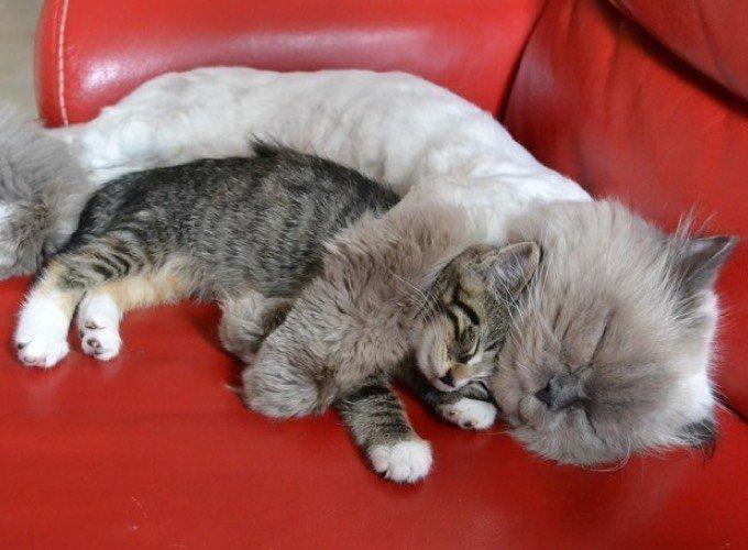Gros câlins entre chats