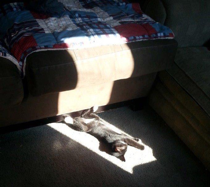 Le chat qui dort au soleil