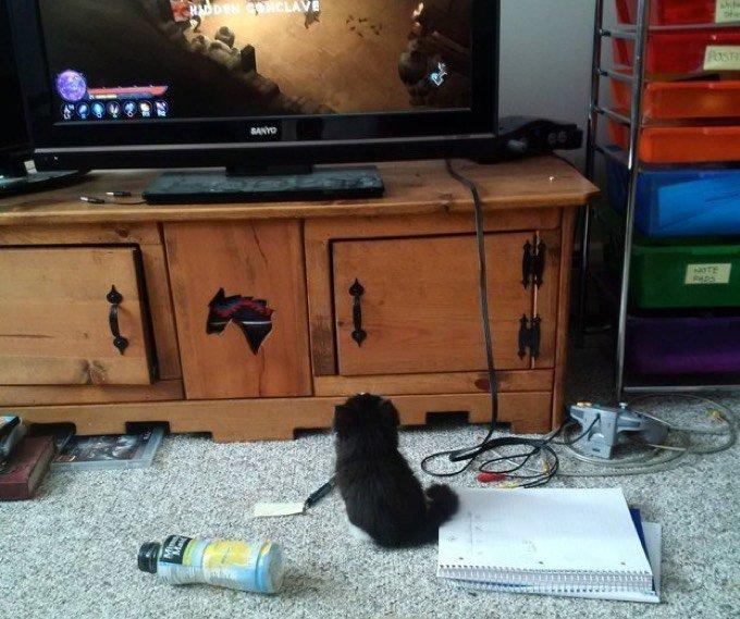 Chat envouté par la télé