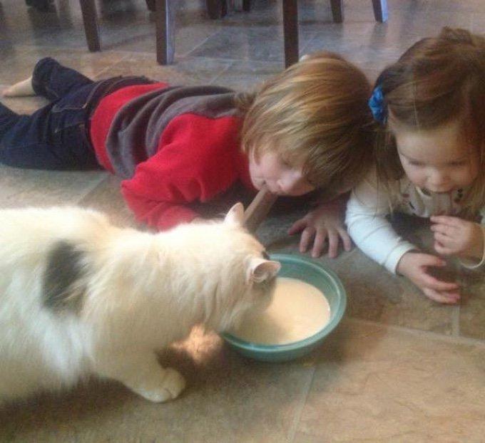 chat blanc noir lait enfants