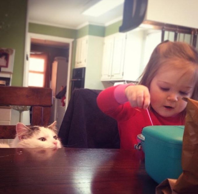 enfant mange table chat blanc noir