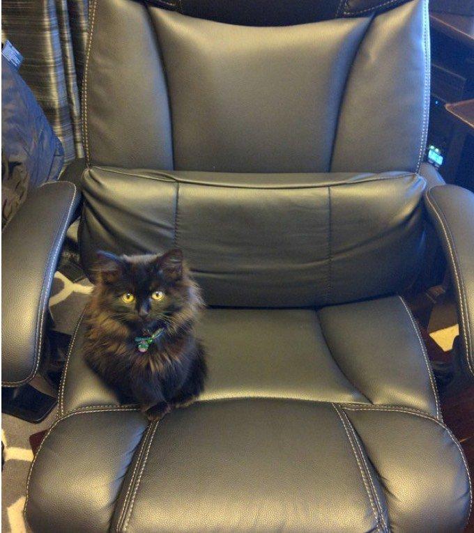 Chat sur un fauteuil