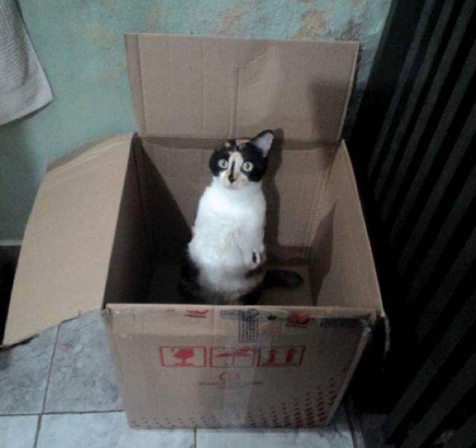 chat carton sans pattes