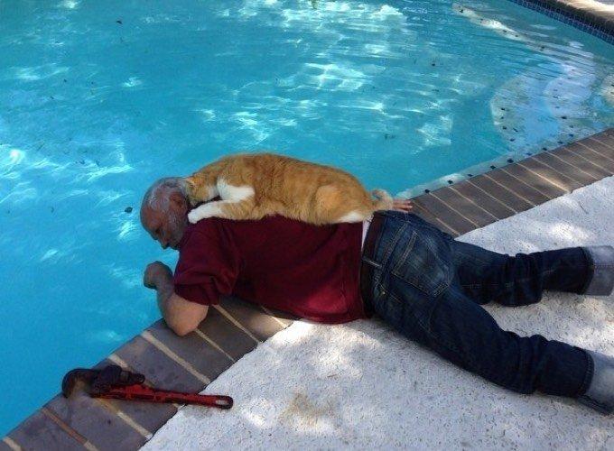 Un chat roux qui aide son maître