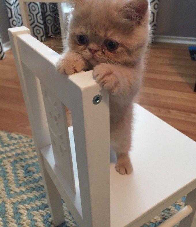 Chaton qui a peur de la hauteur
