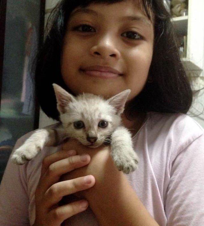 petite fille chaton blanc noisy