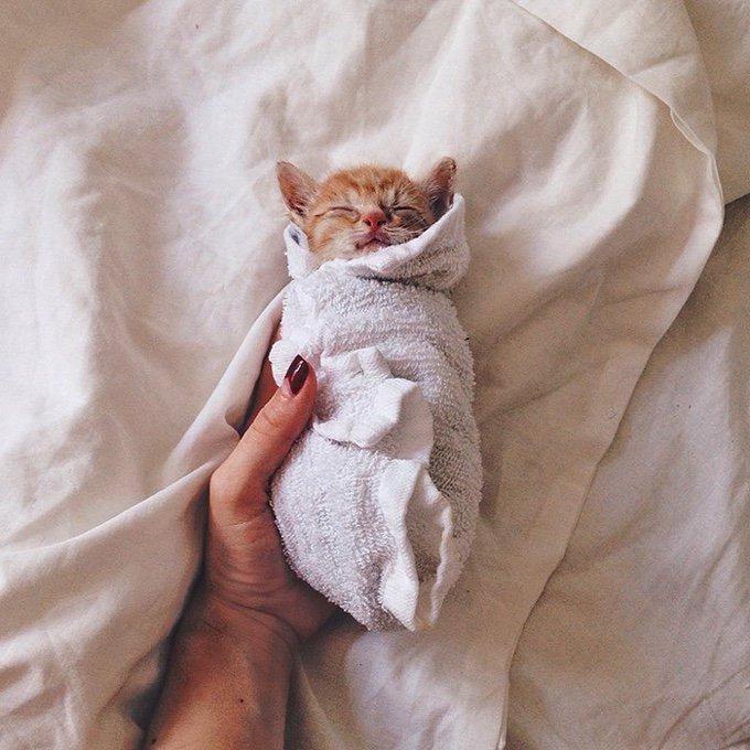 chaton roux serviette dormir