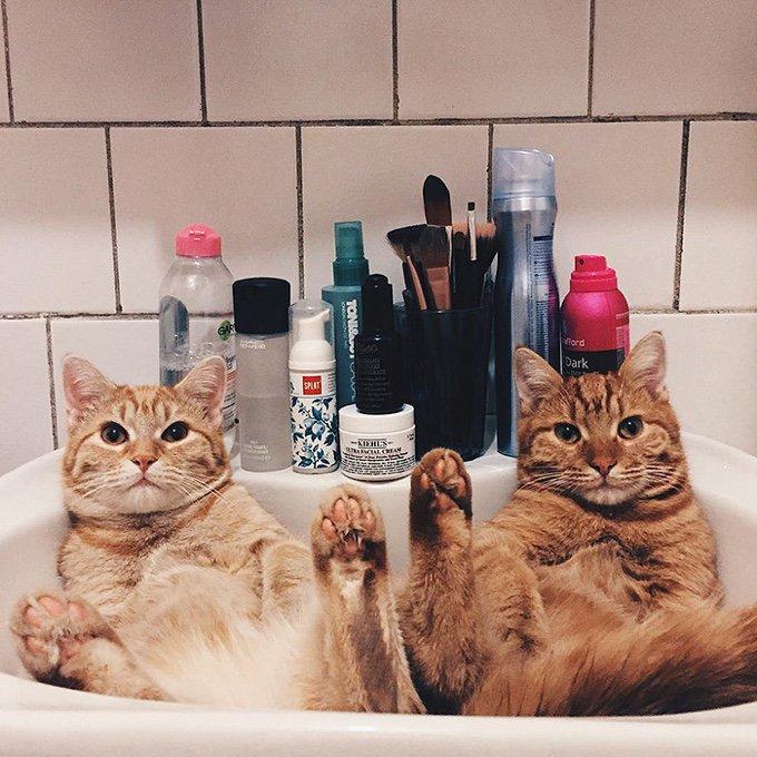 chat roux drôle lavabo