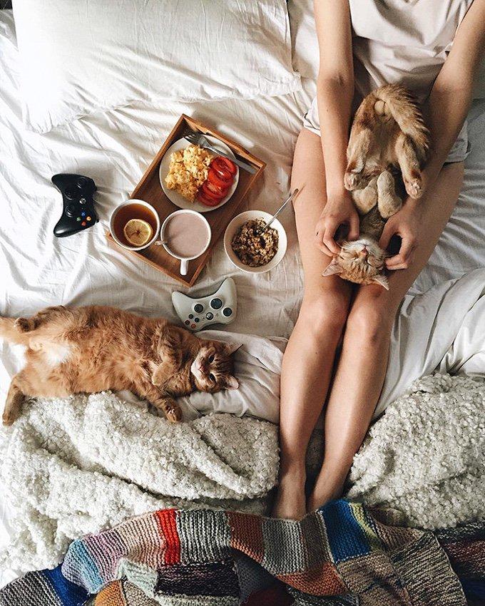 chatons roux petit-déjeuner