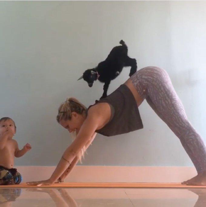 yoga chèvre dos