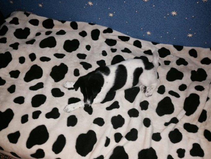 chien tache couverture