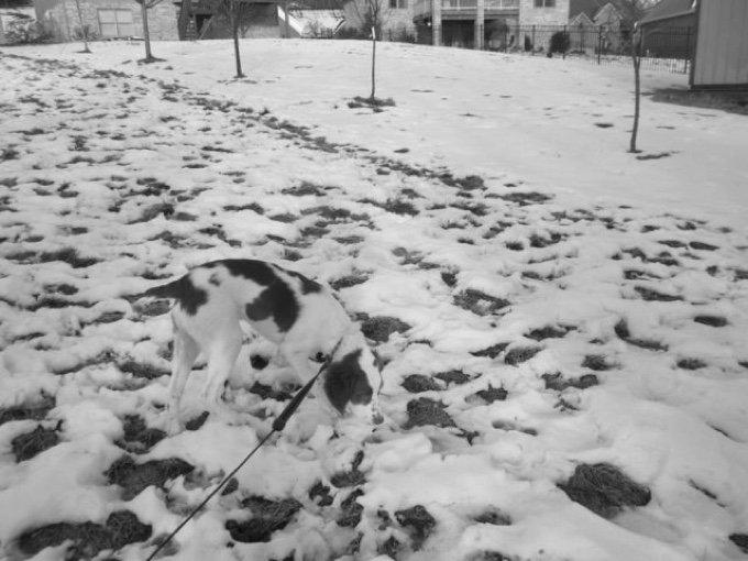 chien neige caché