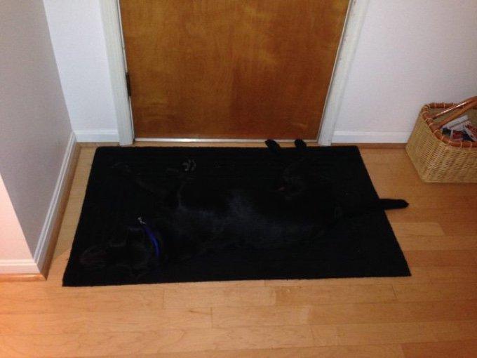 chien noir sur tapis noir caméléon