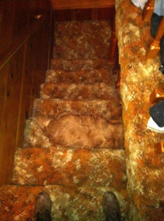 chien escalier caméléon