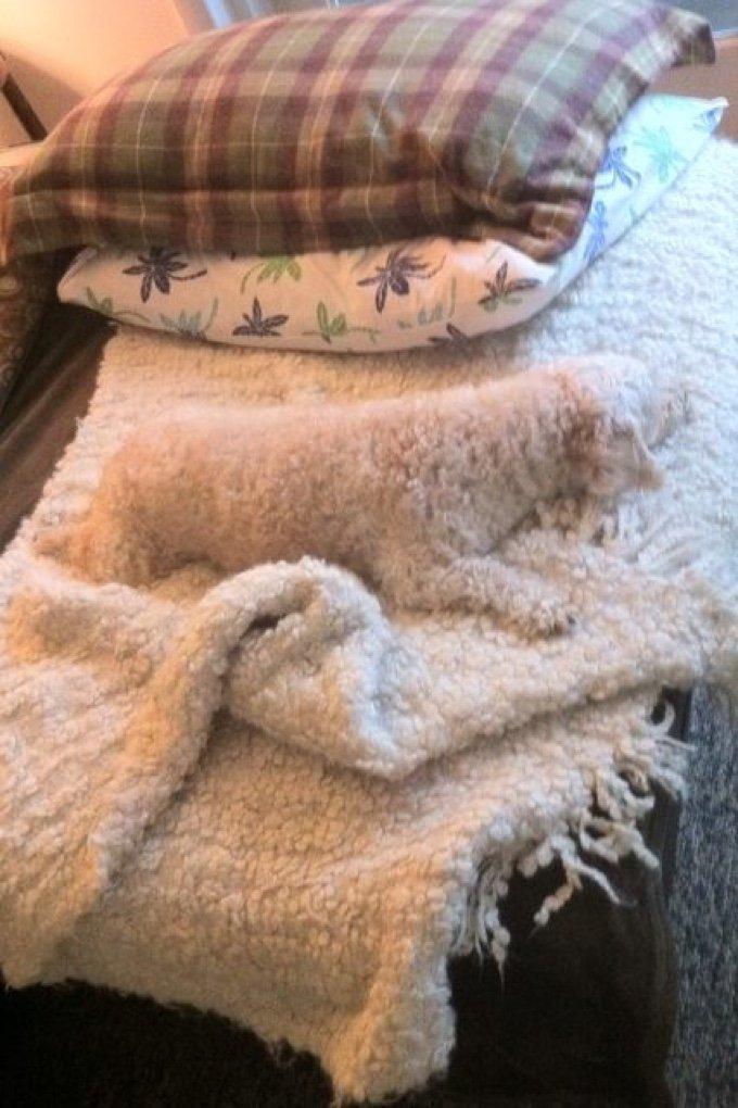 chien couverture caméléon