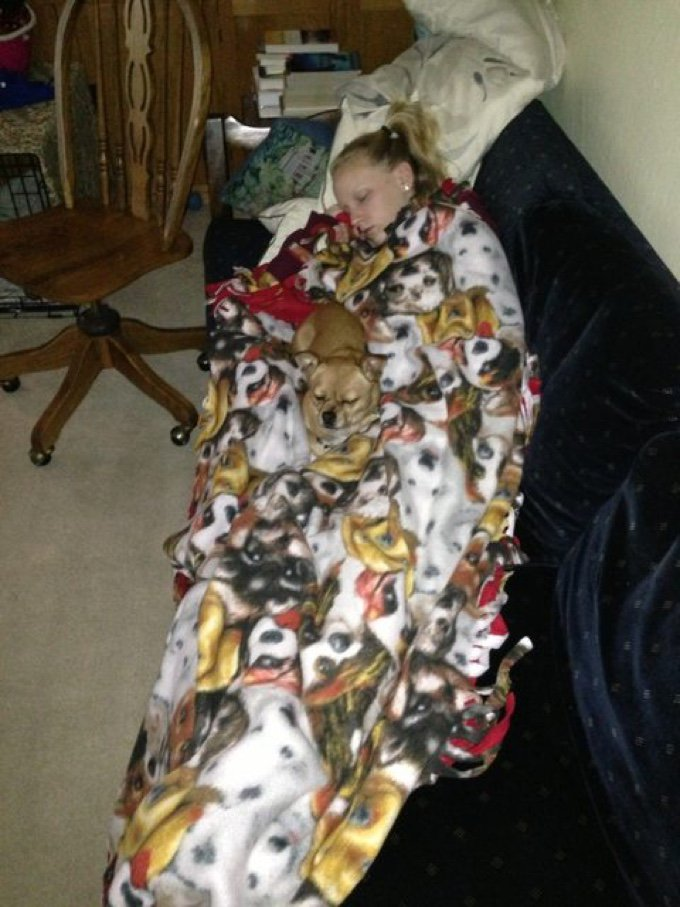 chien couverture caché
