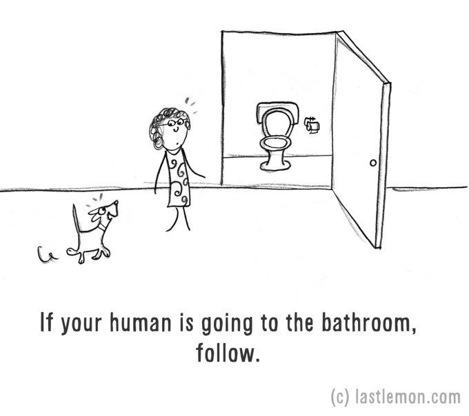 dessin chien toilette