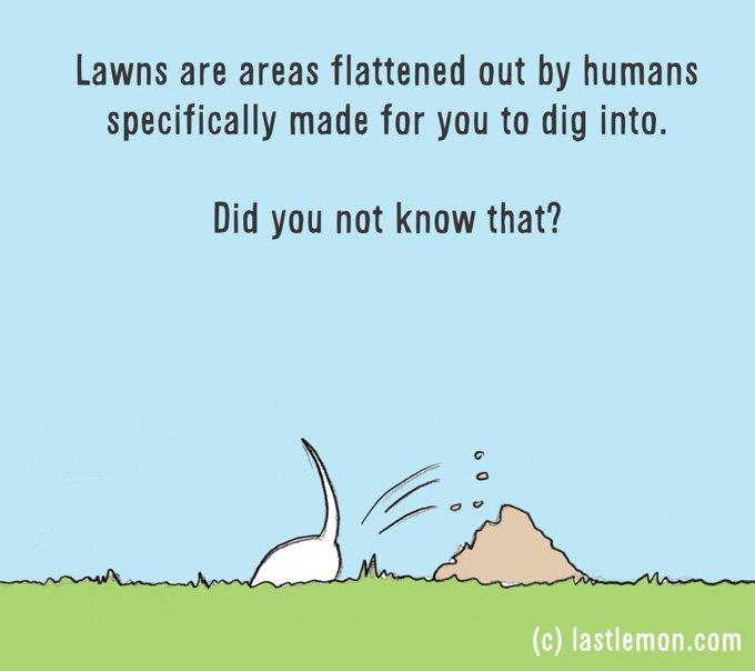 dessin humour chien creuse trou jardin