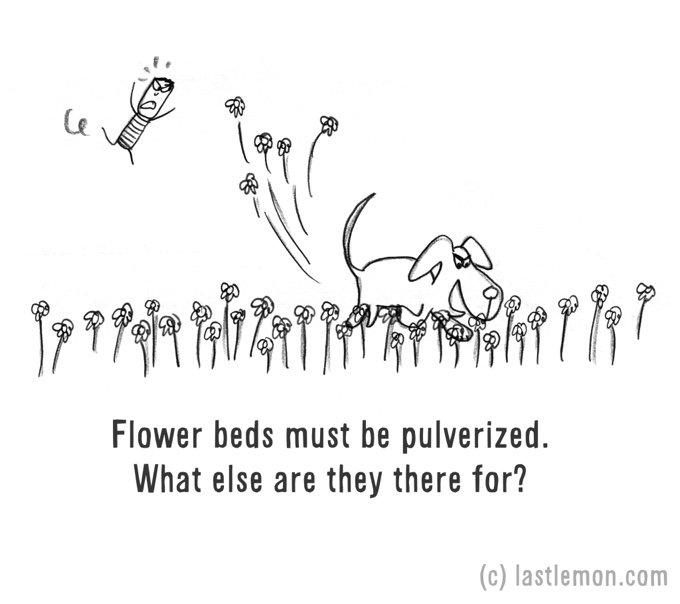 dessin humour chien fleurs