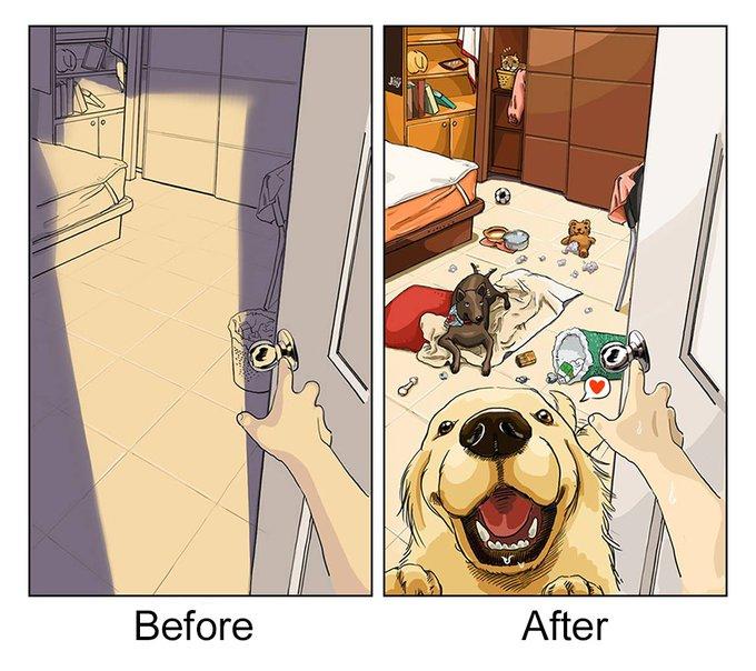 Appartement : avant et après l'adoption d'un chien