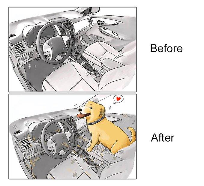 Voiture : avant et après l'adoption d'un chien