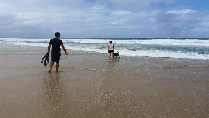 plage australie chien