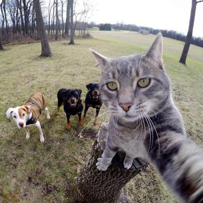 selfie chat chiens rottweilers