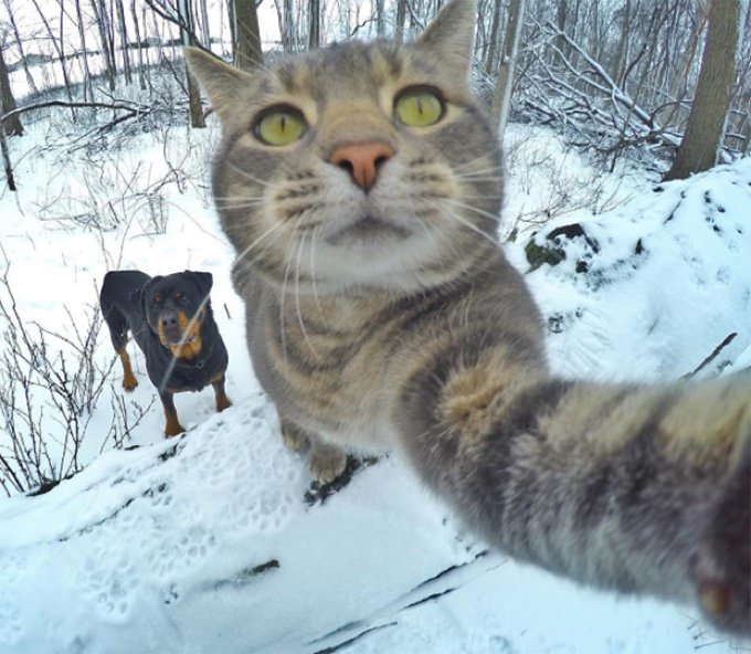 selfie chat chien manny