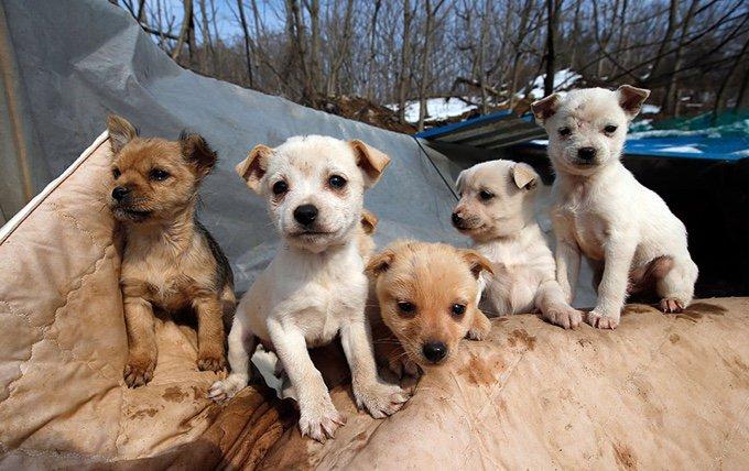 Corée du sud chien sauvés myoung sook