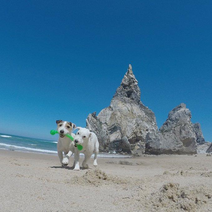 chiens plages