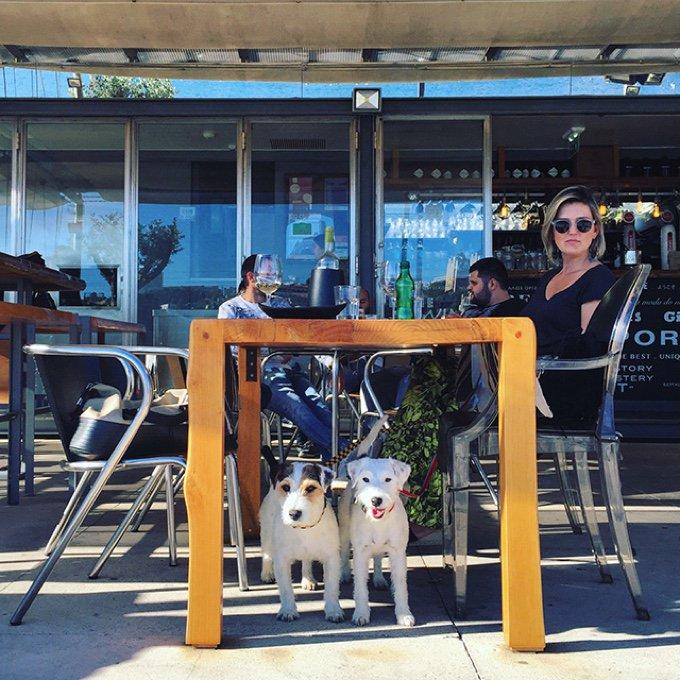 chiens restaurant