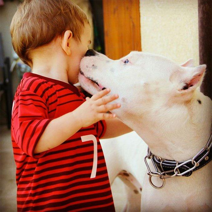 10 choses sur les chiens que les enfants doivent savoir