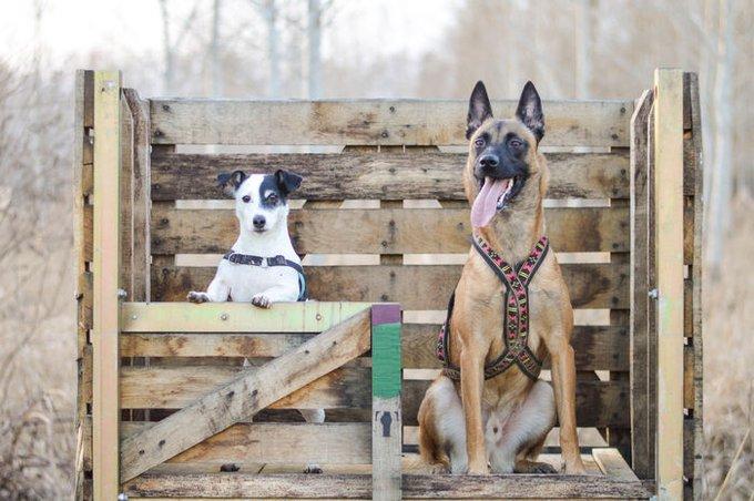 7 choses à savoir avant d'adopter un second chien