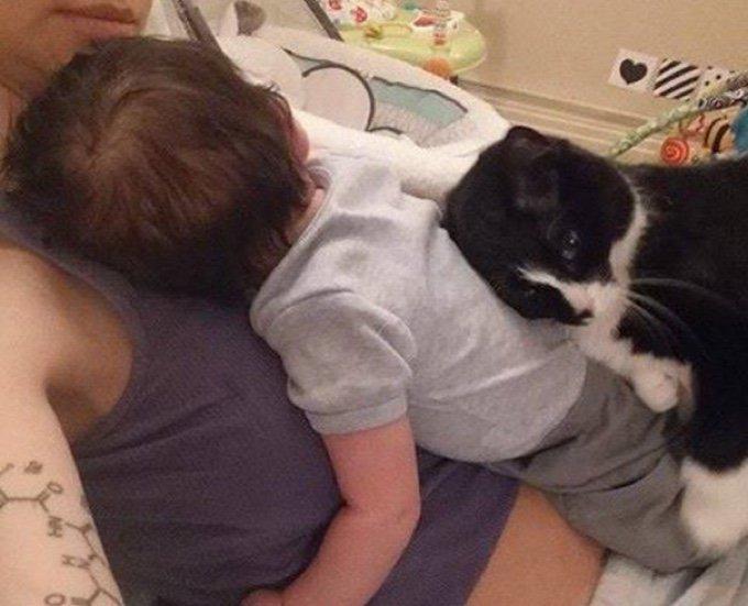 bébé chat amitié