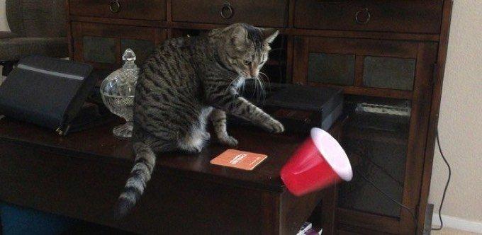 Chat qui fait des bêtises
