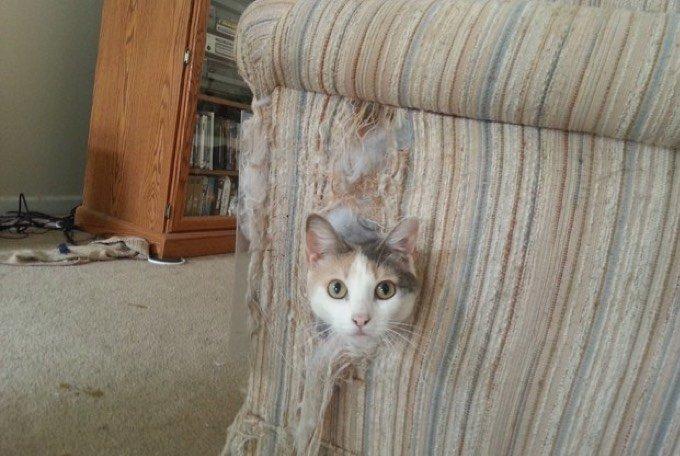 Chat qui fait ses griffes sur le canapé