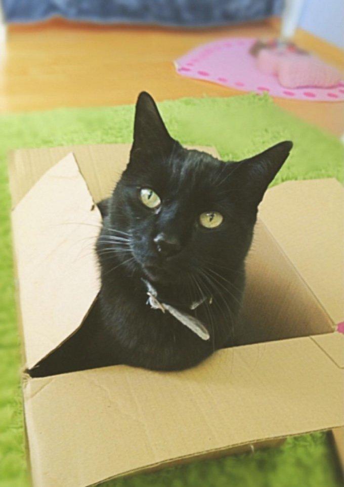 chat noir carton
