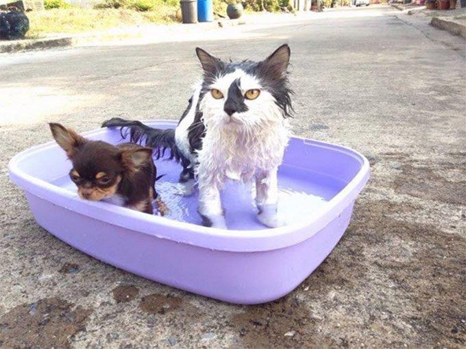 C'est l'heure du bain !