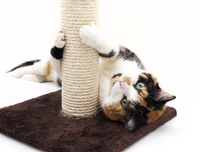 faire ses griffes est bon pour votre chat